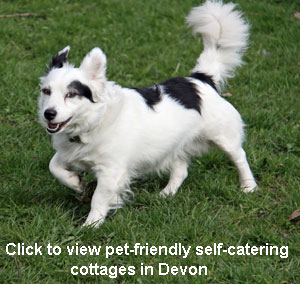 pet friendly selfcatering holiday cottages devon