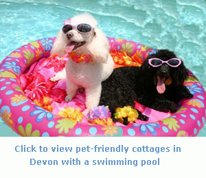 have good fun in pet friendly cottages in devon with a swimming pool